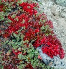 Vakre høstfarger i fjellet